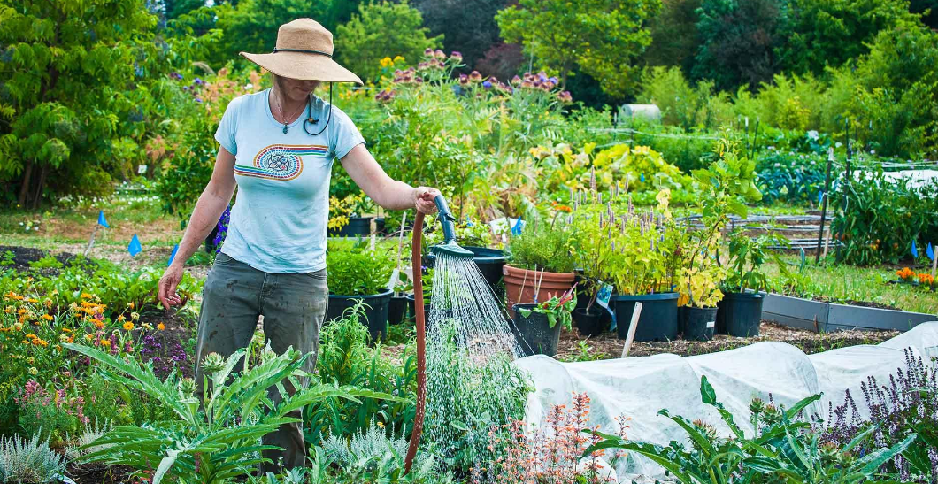 Organic Gardening: What Makes It The Best Option? - Grow Your Own Food